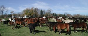 various breeds and sizes or horses in a large pasture